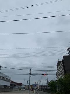 IMG_0597.JPG